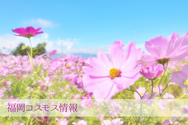 福岡コスモス情報