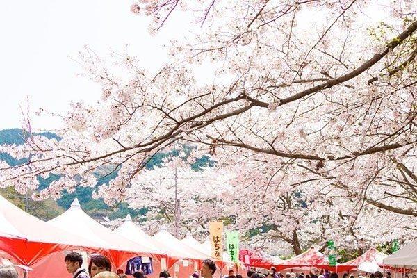 久山町の桜