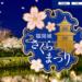 舞鶴公園のお花見「福岡城さくらまつり」夜にはライトアップあり!