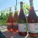 ワタリセファーム&ワイナリー 北九州初のワインが出来ました!